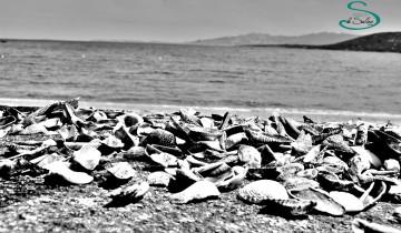 Le Saline Palau Posidonia